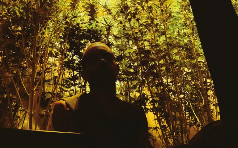 weed herbe technikart confinement